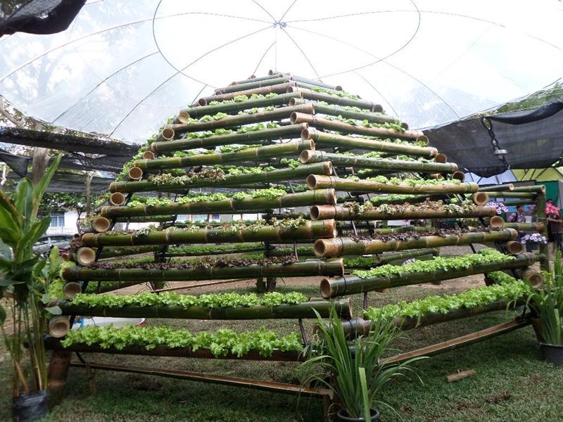 สภาเกษตร ฯ ส่งเสริมเกษตรกรรุ่นใหม่ปลูกผักด้วยกระบอกไม้ไผ่